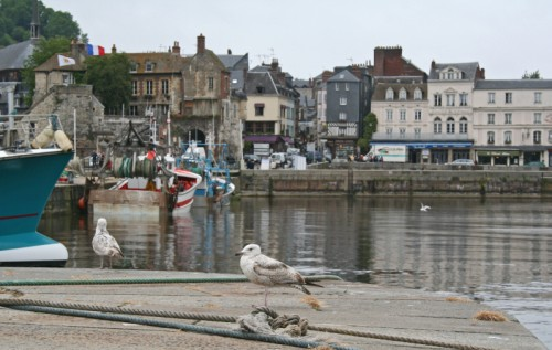 Gull in Honfleur